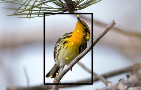 ابداع اپلیکیشنی برای تشخیص گونه پرندگان