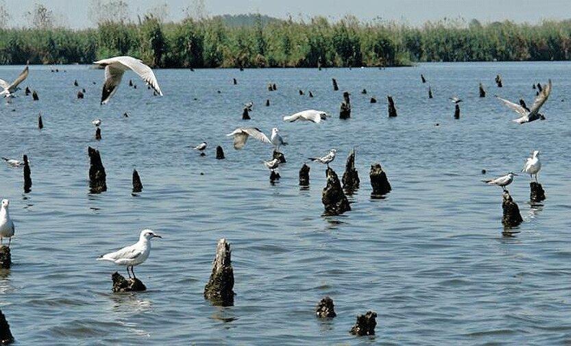 خطر آنفلوآنزا جدی است ، شکار پرندگان مهاجر ممنوع