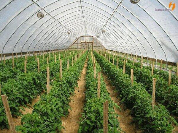 افزایش 15درصدی سطح زیر کشت گلخانه در شهرستان میرجاوه