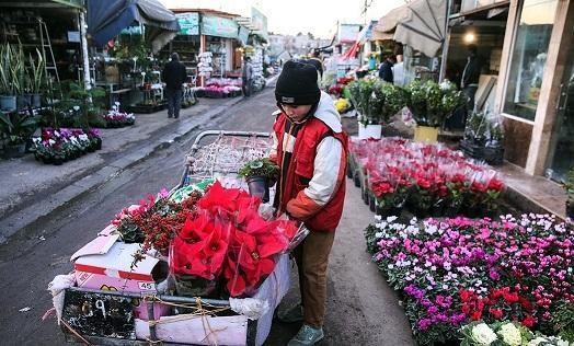 گل فروشان در انتظار بازگشایی تالارها؛ میزان اشتغالزایی صنعت گل چقدر است؟
