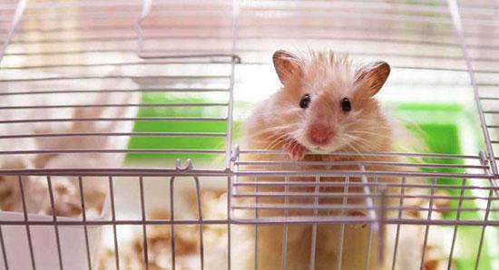 تأثیرات حیوانات خانگی بر زندگی انسان