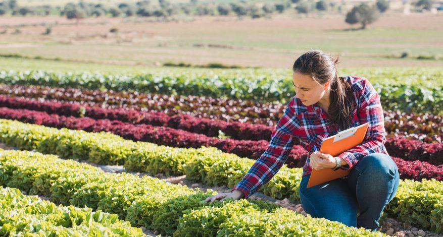 برنامه مهاجرتی کشاورزی - مواد غذایی در کانادا