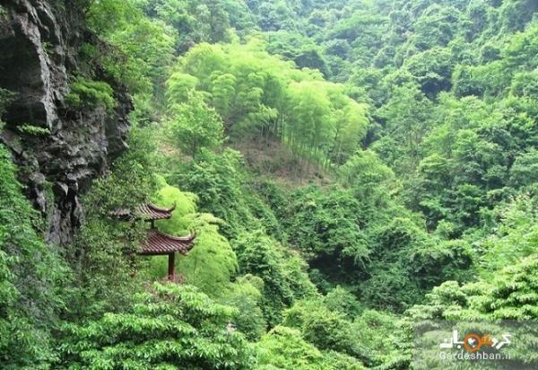 جنگل های فنگ شویی بزرگترین امید چین برای حذف دی اکسید کربن