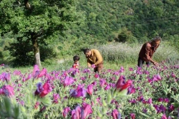 خبرنگاران مرکز شکوفایی گیاهان دارویی و گردشگری در اردبیل ایجاد می شود